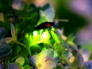 firefly-light-under